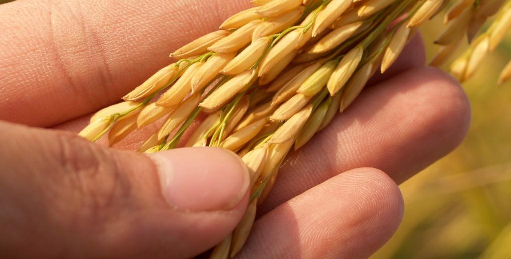 agriculture-asia-autumn-236473
